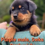 Purple boy, 5wks