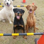 Benny the Rottweiler and his mates at the park